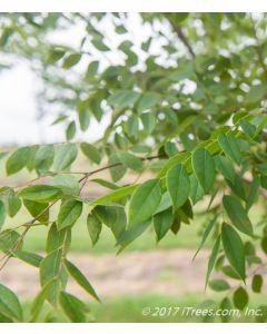 Foliage Closeup