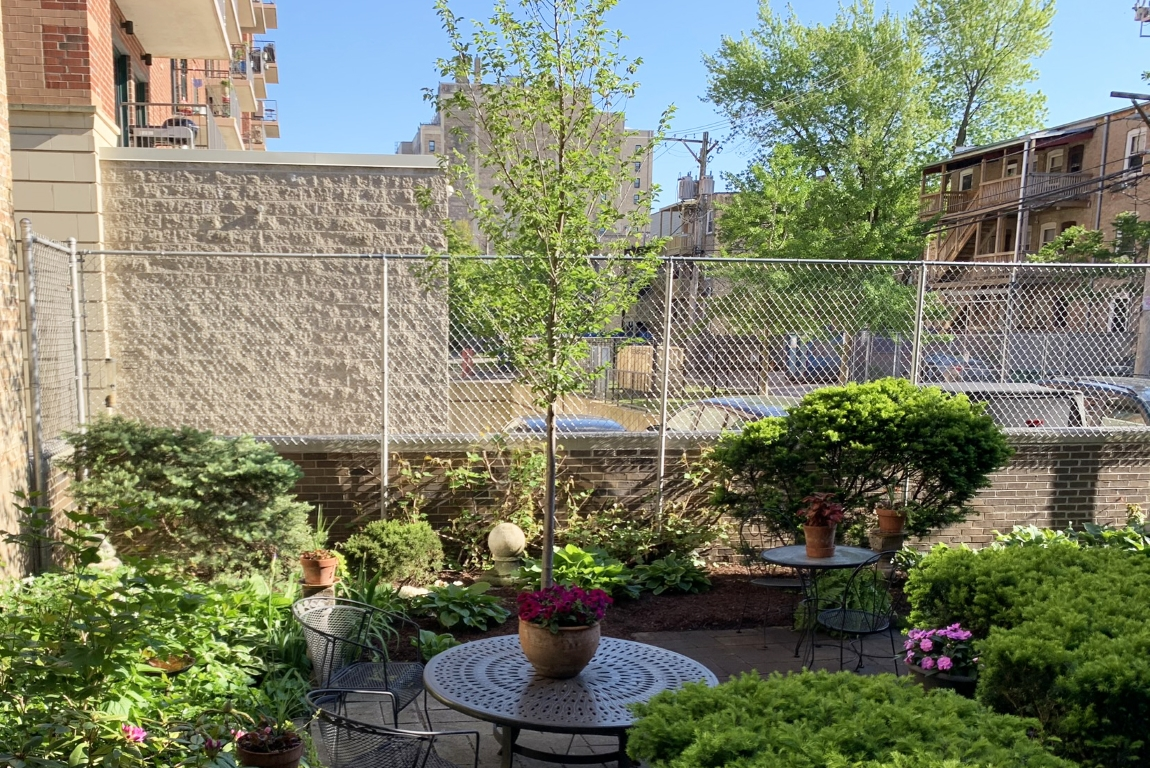 New Horizon Elm in Chicago backyard garden