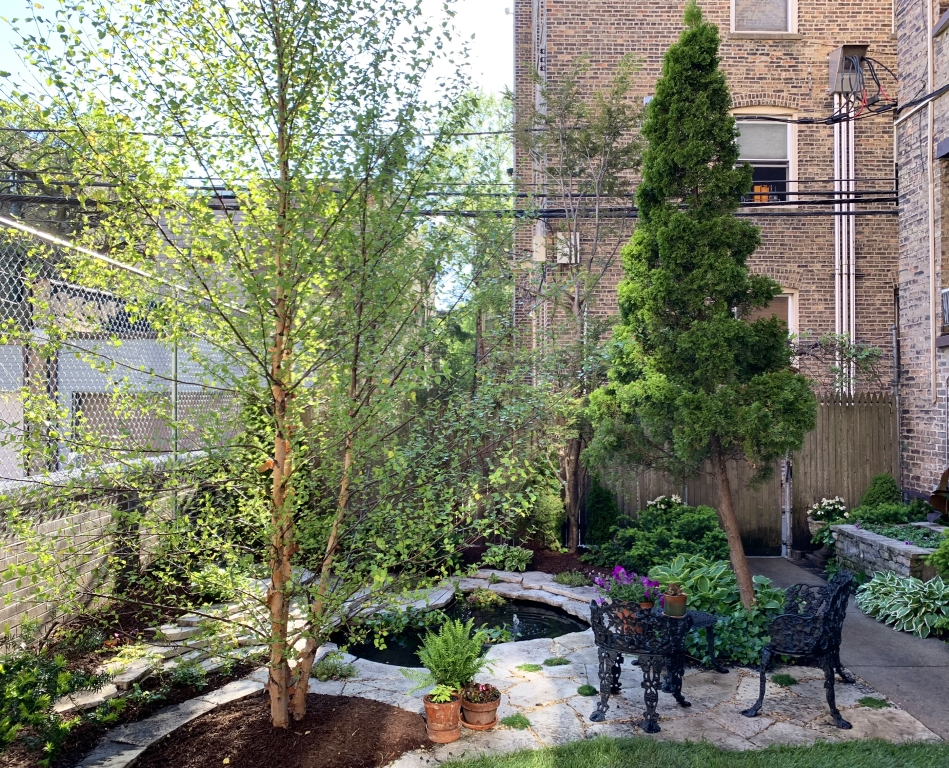 Chicago backyard garden trees