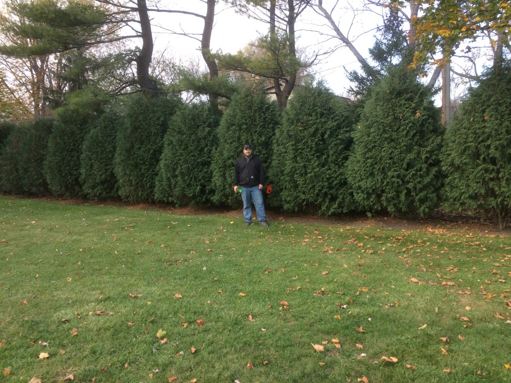 Techny Arborvitae Add Privacy Screening