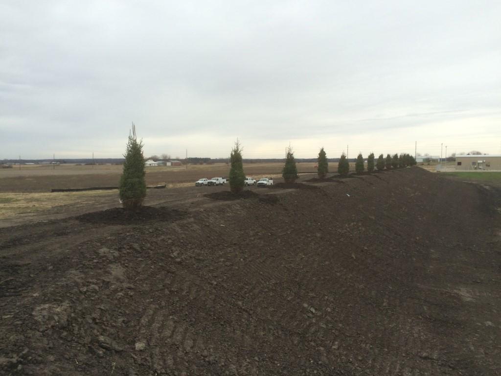 Evergreens Offer Windbreak for Commercial Landscape