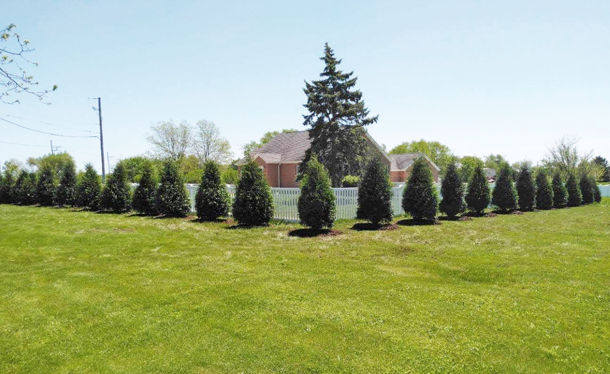 Techny Arborvitae Privacy Hedge