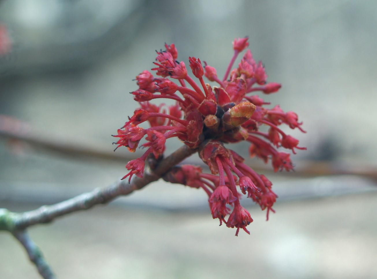 Blooming Brief April 20th