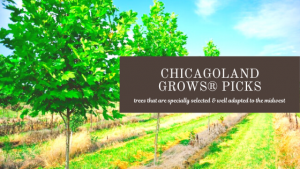 Chicagoland Grows® Tree Picks