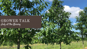 Grower Talk: July at the Nursery