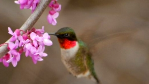 Best Trees to Plant to Attract Birds & Butterflies