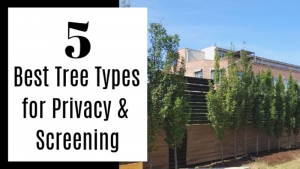 5 Best Tree Types for Privacy & Screening