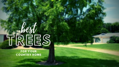 Best Trees for Your Country Home