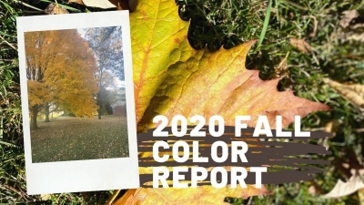 2020 Fall Color Report