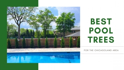 What are the best pool trees for the Chicagoland area?