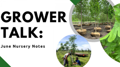Grower Talk: June Nursery Notes