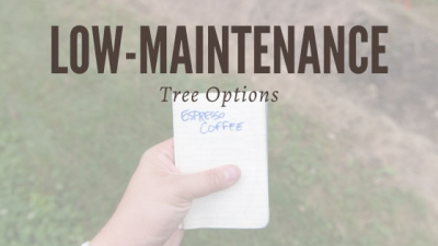 Are There Any Low-maintenance Tree Options?