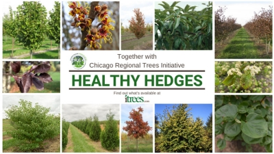 Healthy Hedges