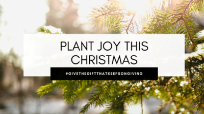 Plant Joy This Holiday Season