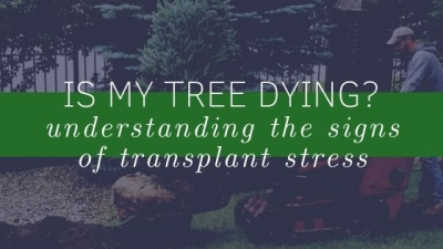 Is My Tree Dying?