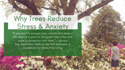 Why Trees Reduce Stress & Anxiety