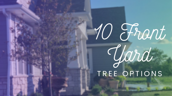 10 Front Yard Tree Options