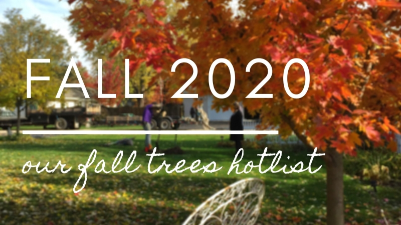 Fall 2020 — Our Fall Trees Hotlist