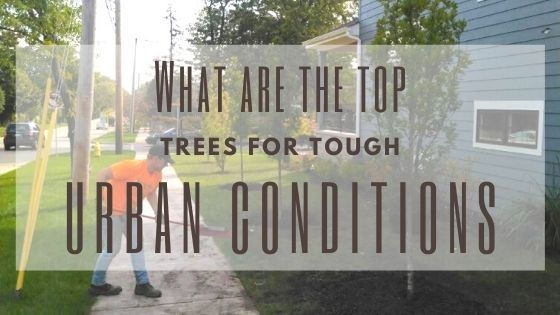 What are the Top Trees for Tough Urban Conditions?