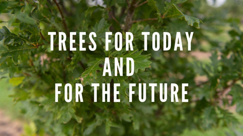 Trees for Today and the Future