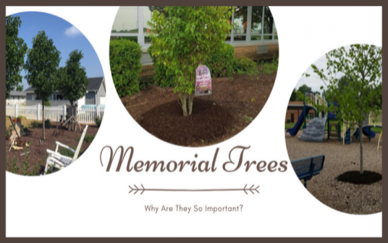 Memorial Trees: Why Are They So Important?