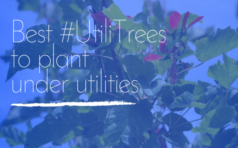 Best #UtiliTrees to Plant Under Utilities