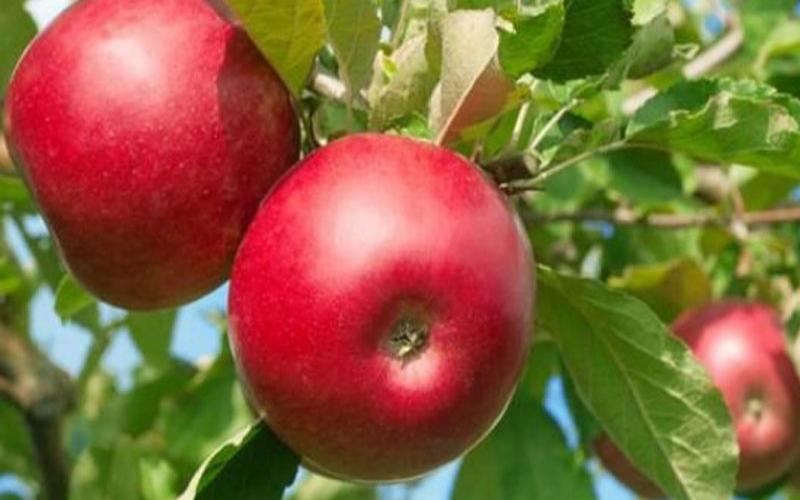 Fruit Trees, we got 'em!
