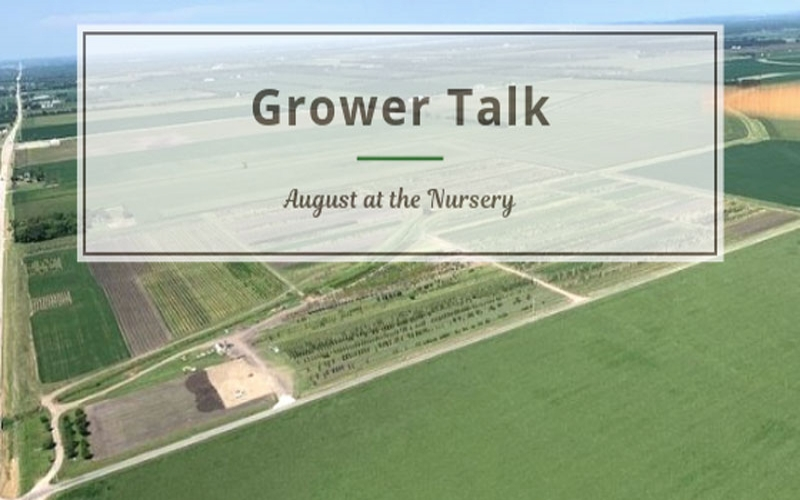 Grower Talk: August at the Nursery