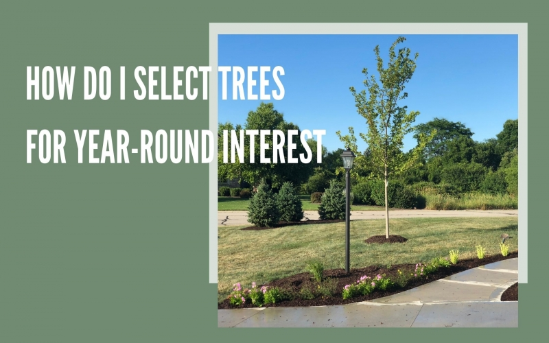 How do I Select Trees for Year-round Interest?