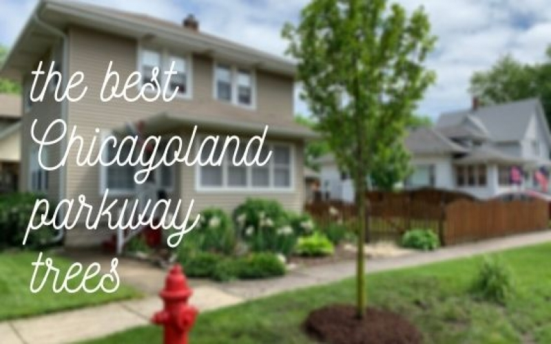 The Best Chicagoland Parkway Trees