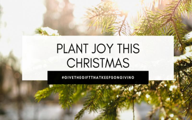 Plant Joy This Holiday Season