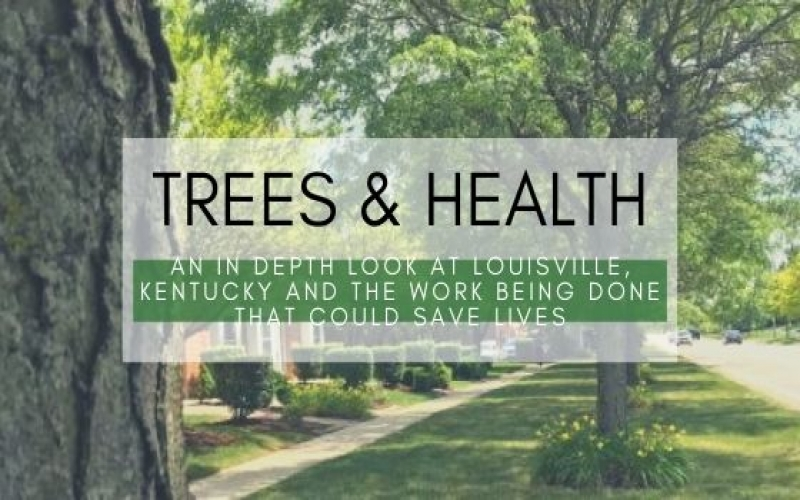 Trees & Health: An In Depth Look into the Work Being Done That Could Save Lives