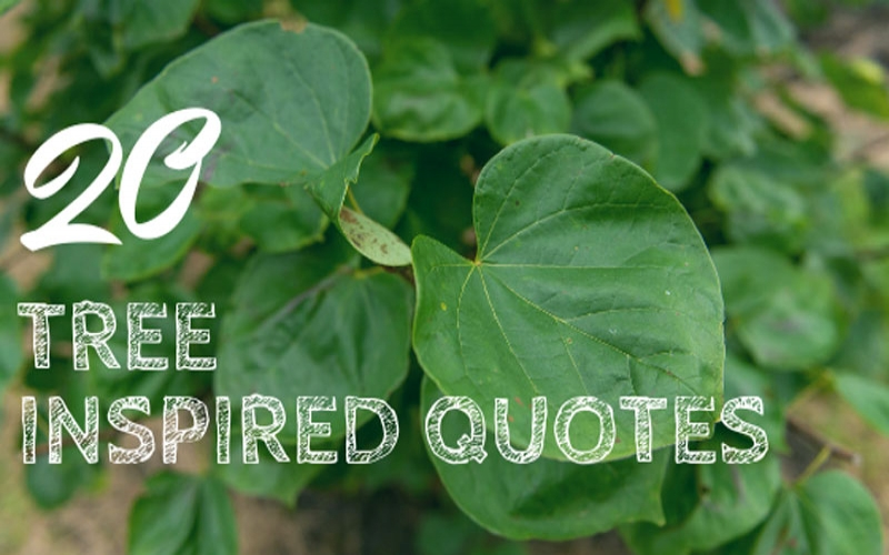 iTrees.com's Top 20 Tree Quotes