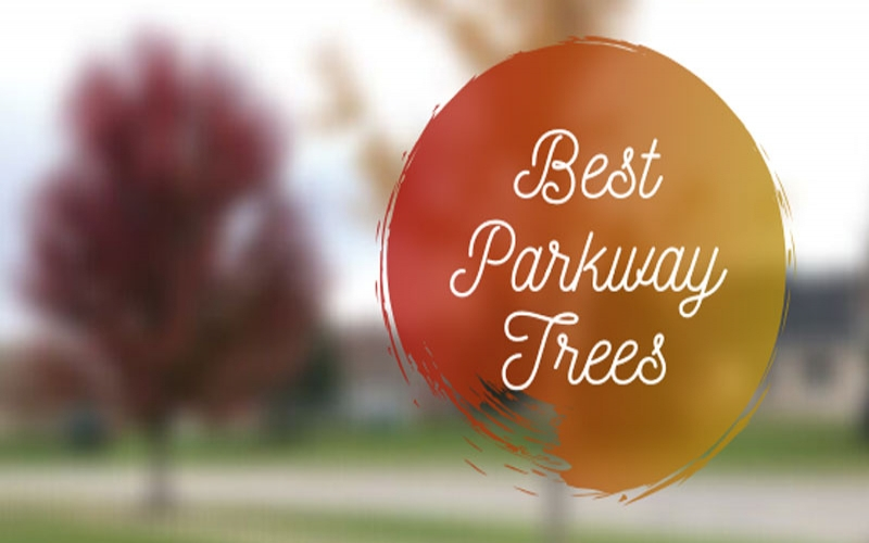Best Parkway Trees