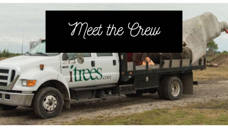 Meet the iTrees.com Crew