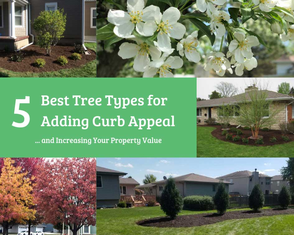 5 Best Tree Types for Adding Curb Appeal and Increasing Your Property Value