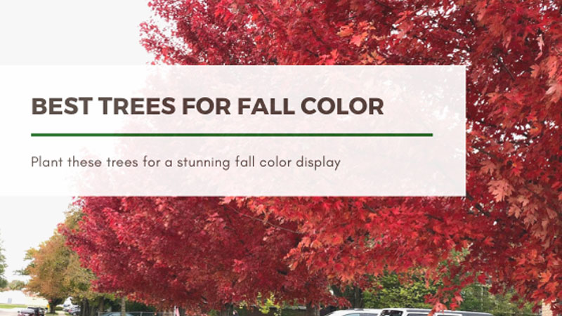 Best Trees to Plant for Fall Color