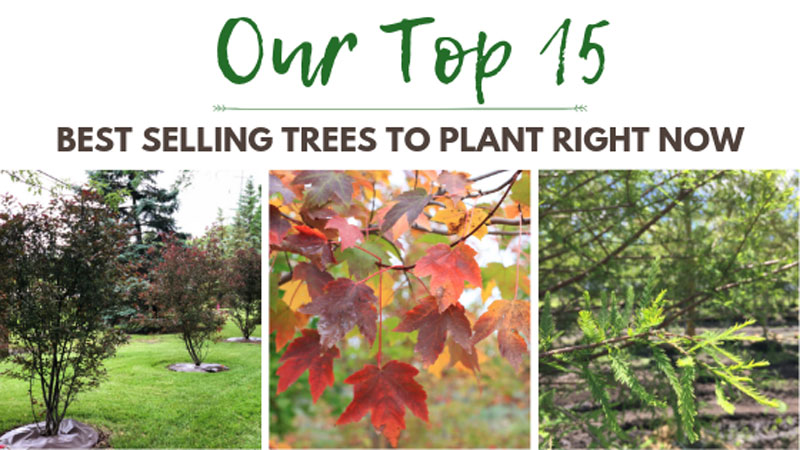 Our Top 15 Best Selling Trees