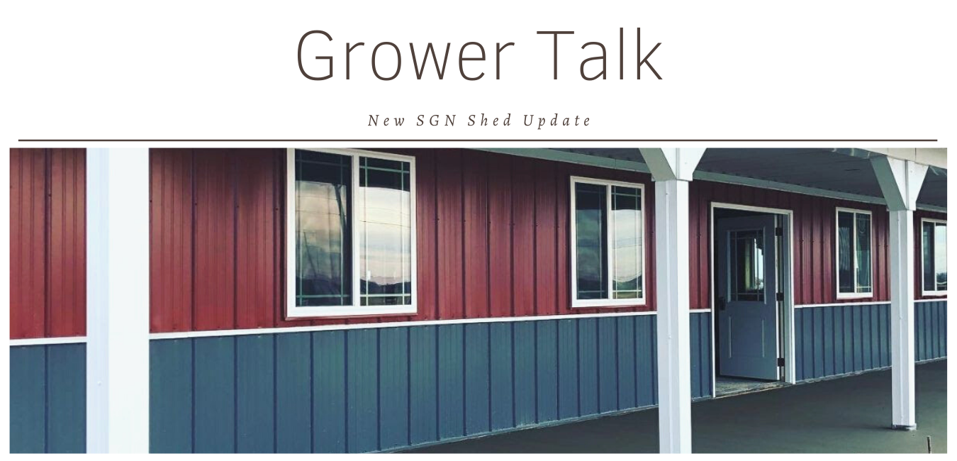 Grower Talk: New SGN Shed Update