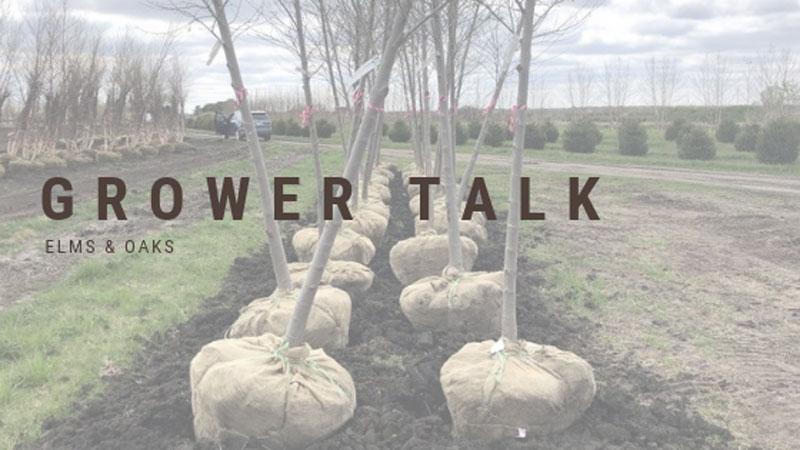 Grower Talk: Elms & Oaks