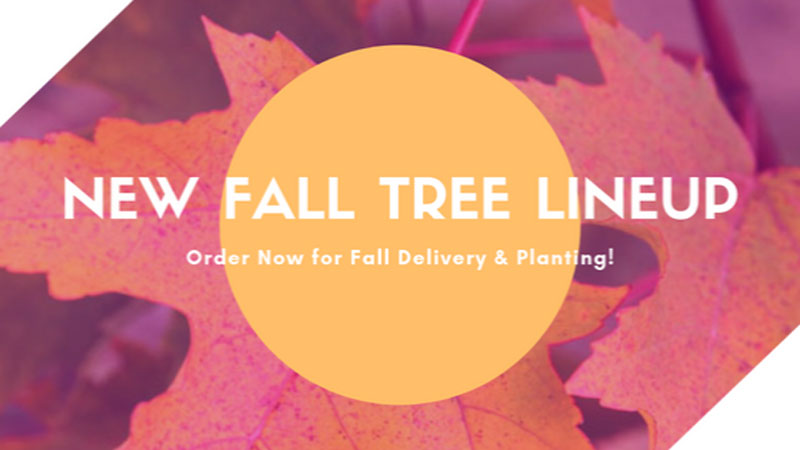 New Fall Tree Linup!