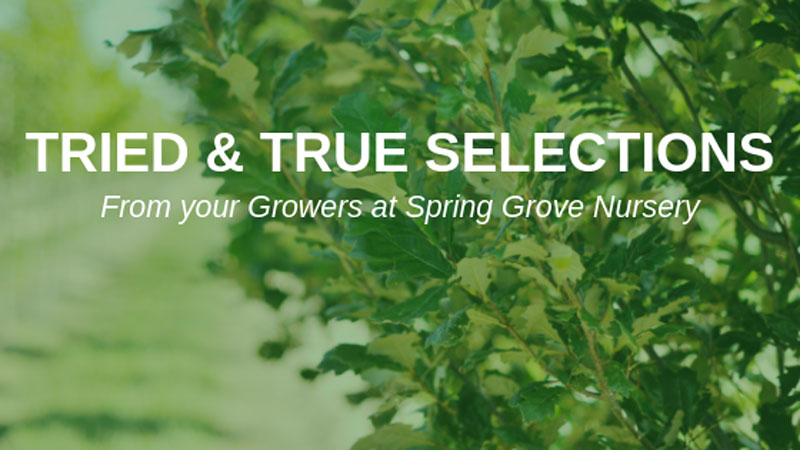 Grower Talk- Grower's Picks