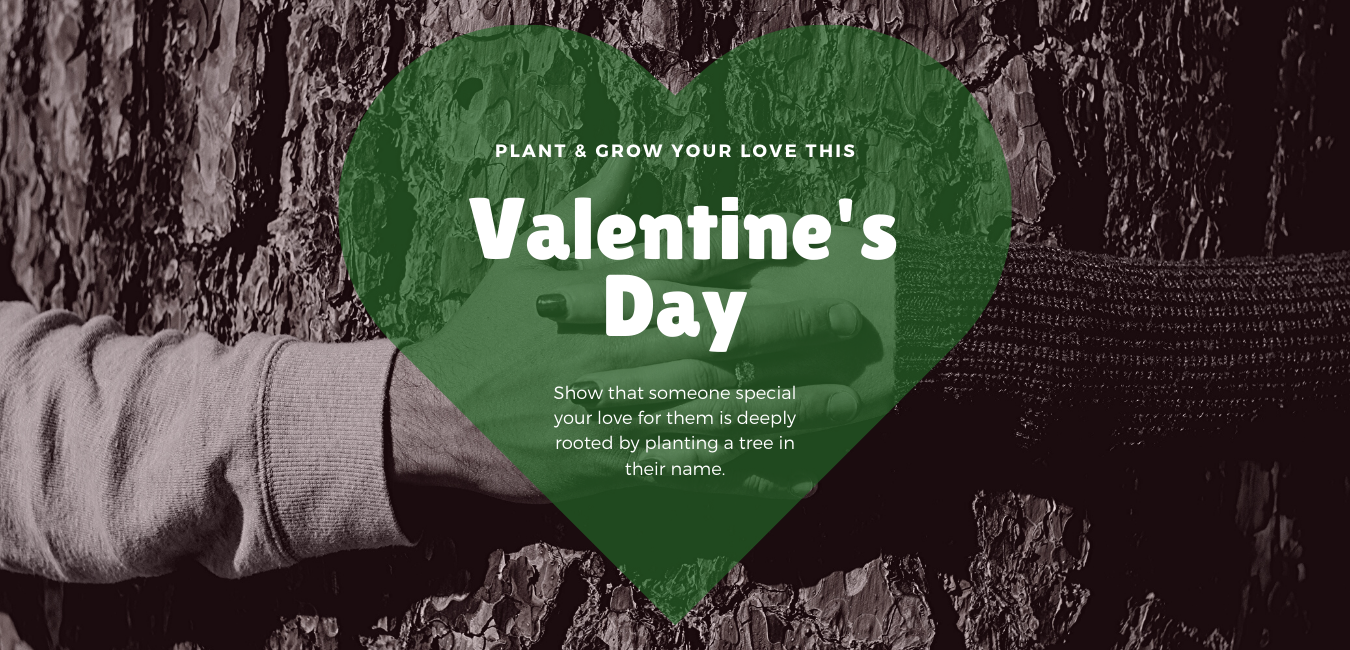 Plant & Grow Your Love This Valentine's Day
