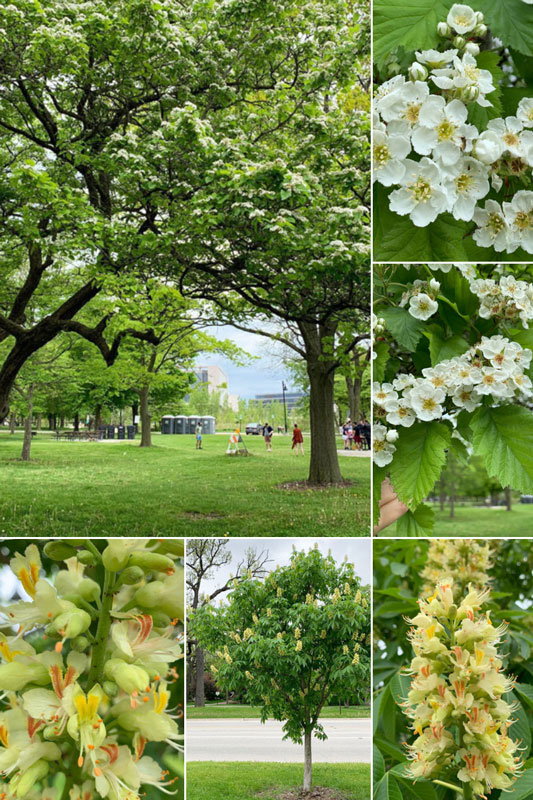 Collage of blooming trees