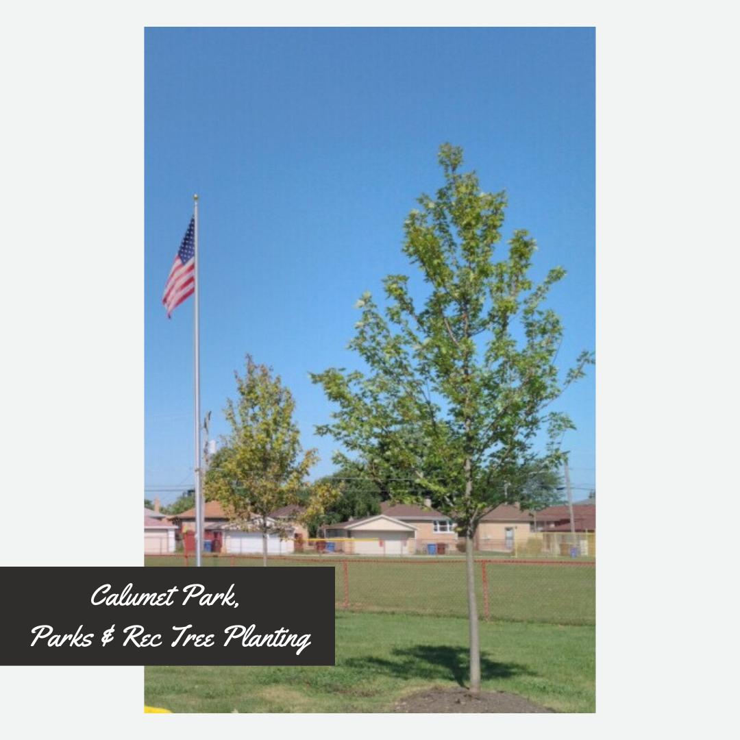 Calumet Park, Parks and Rec Tree Planting