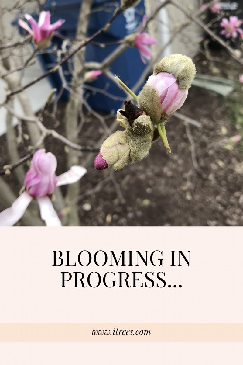 Blooming Brief