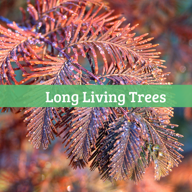 Long Living Trees