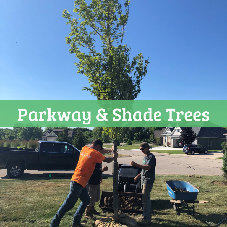 Parkway & Shade Trees