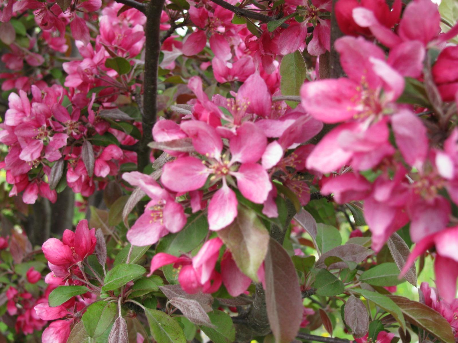 Profusion Flowers Closeup