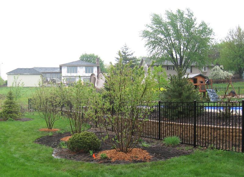 Serviceberry near pool